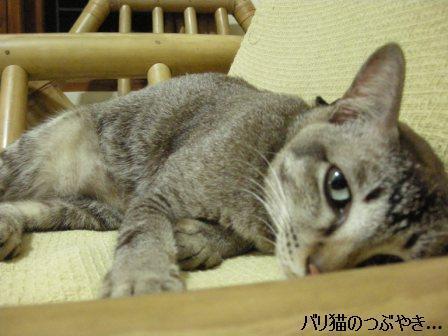 ブログ20110918-5.JPG