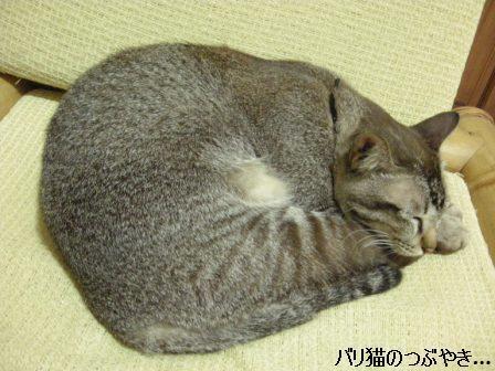 ブログ20110919-1.JPG