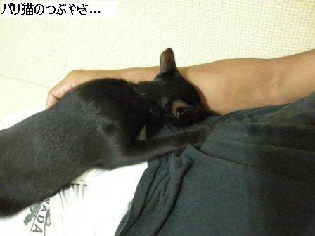 ブログ20110919-3.JPG