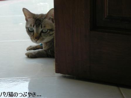 ブログ20110919-6.JPG