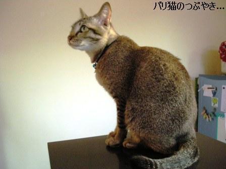 ブログ20110920-2.JPG