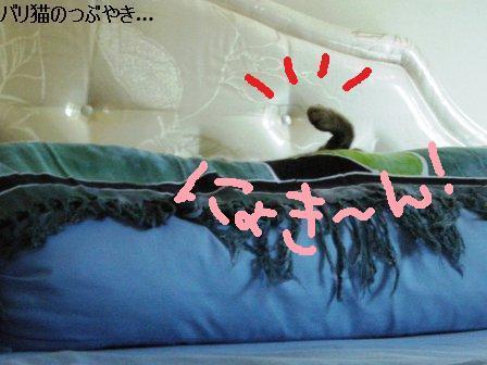 ブログ20110923-2.JPG