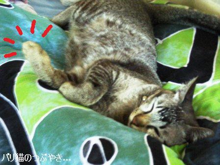ブログ20110923-4.JPG