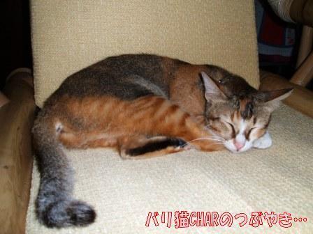 ブログ20100827-1.JPG