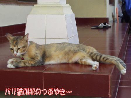ブログ20100827-3.JPG