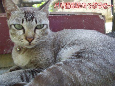 ブログ20100827-4.JPG