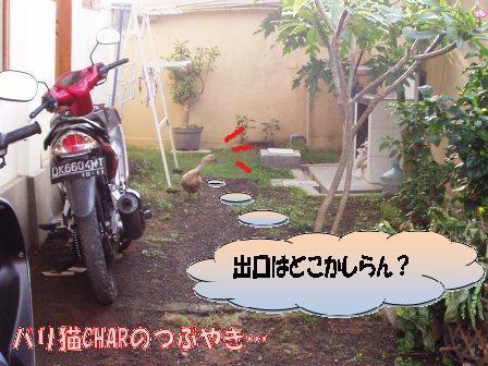 ブログ20100829-3.JPG