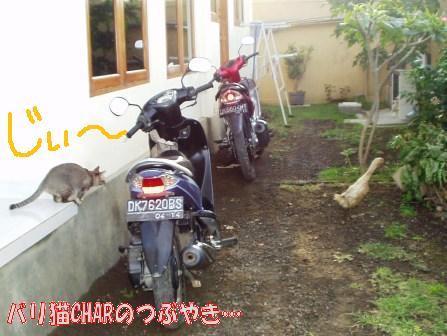 ブログ20100829-4.JPG