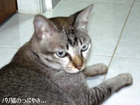 ブログ20110418-8.JPG