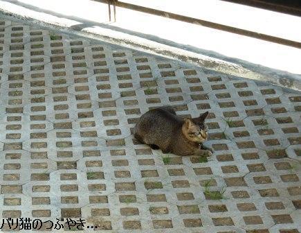 ブログ20110828-15.JPG
