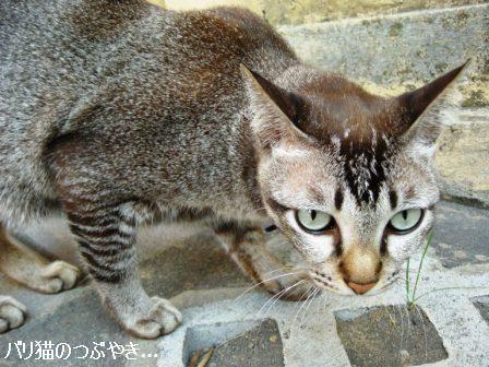 ブログ20110828-16.JPG