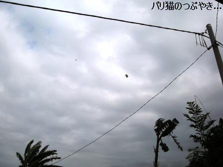 ブログ20110913-12.JPG
