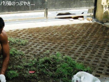 ブログ20110922-12.JPG
